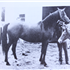Tawali (Raseyn x Rabiyat) bay mare, foaled February 24, 1938
