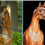 Rga Kouress & Veronica GA...What do these two great Arabian mares have in common?