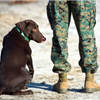 """Being alone and being lonely aren't the same thing, but the impacts of both can be reduced through companion pet adoption. Elderly veterans are more prone to both loneliness and depression, and a pet's focus on the """"here and now"""""""