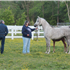 I was visiting with my dear friends Ray and Marilyn owners of Winning Edge Arabians and Rob got these photos of Ray showing me her new foal out of Feme Jolie WEA…This mare just gets more and more beautiful each year!