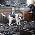 Also receiving PDSA's Gold Medal was five-year-old Beagle, Frodo, who turned life-saver one night in June 2008 when fire swept through the family home in St Bees, Cumbria. Smoke alarms in the house were faulty but Frodo woke everyone to safety