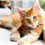 11 Things No One Tells You About Owning a Cat