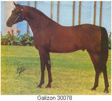 U S National Champion Stallion Galizon Full Brother Gay Rouge Canadian Tt Stallion And Sire Of Canadian Champion Stallion Gai Champion And Full Sister