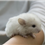 Chinchilla Facts – The Top 10 Interesting Facts About Chinchillas