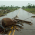 More than 100 horses feared dead after 200mph twister.